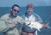 Jack Crevalle on the Key West flats