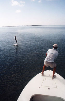 Key West fly fishing for tarpon